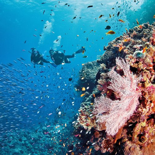 australian-great-barrier-reef-5